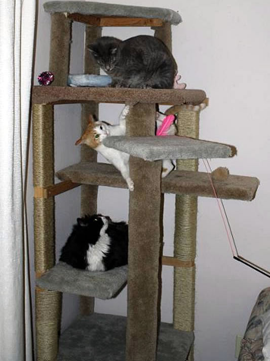 How to make a cat climbing tree without buying any new for How to build a cat tree