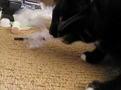cat eats plastic