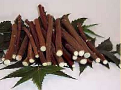 Neem chew sticks toothbrush
