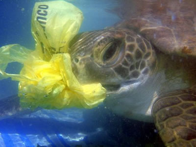 sea turtle eating plastic bag